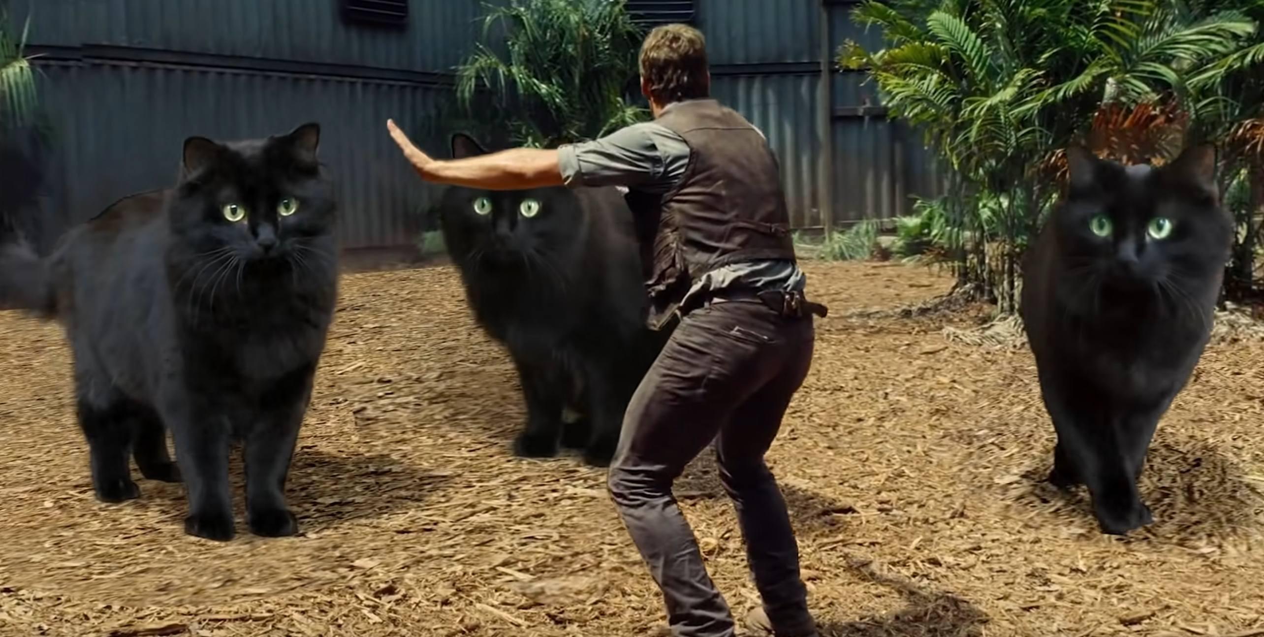 Vous aimez la chatte ?