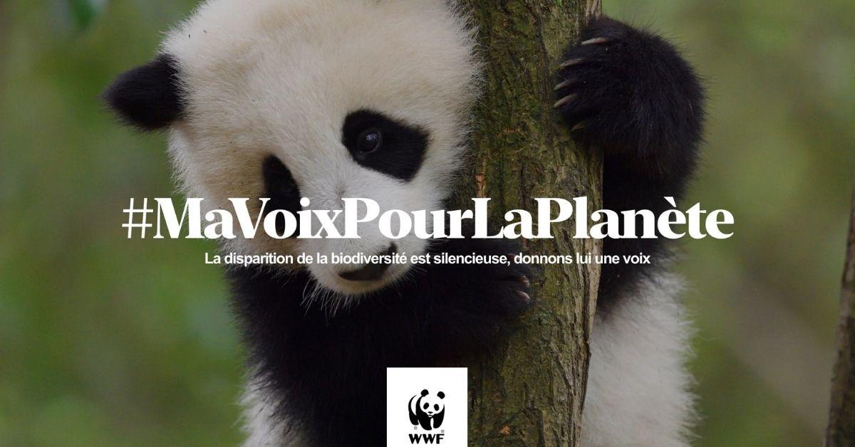 Face à « l'hécatombe muette » de la biodiversité, la WWF appelle les artistes à donner de la voix